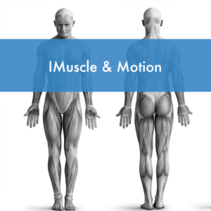 Curso imuscle-&motion en Fisiodocent