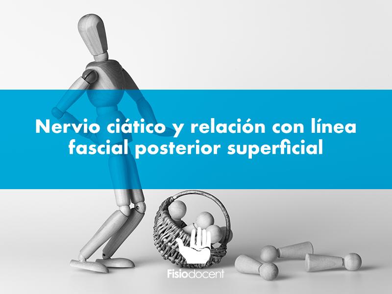 nervio-ciatico-fisiodocent